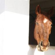 Magenta-notre-cheval-de-course