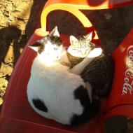 au club les chats